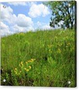 Tall Grass Hillside Acrylic Print