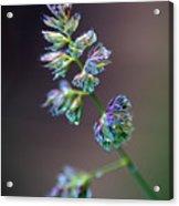 Tall Grass Stem Close-up Acrylic Print
