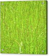 Tall Grassy Meadow Acrylic Print
