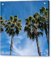 Tall Palms Couples Acrylic Print