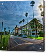 Tall Palms Acrylic Print