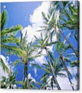 Tall Palms Acrylic Print
