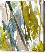 Tall Timber Acrylic Print