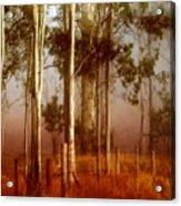 Tall Timbers Acrylic Print