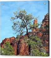 Tall Trees And Rocky Spires Acrylic Print