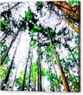 Tall Trees To The Sky Acrylic Print