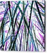 Tall Wet Grass Acrylic Print