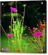 Tall Wispy Flowers In Pink Acrylic Print