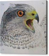 Talon Acrylic Print