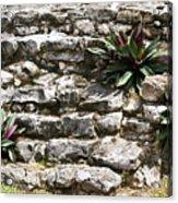 Talum Ruins Plant Life Acrylic Print