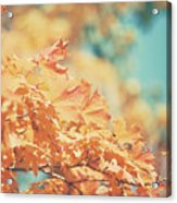 Tangerine Leaves And Turquoise Skies Acrylic Print