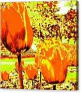 Tangerine Tulips Acrylic Print