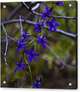 Tangled Acrylic Print by Barbara Schultheis
