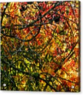 Tangled Branches Acrylic Print