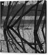 Tangled Reflections Acrylic Print