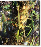 Tangled Seaweed Acrylic Print