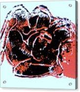 Tarbaby 4 Acrylic Print by Adam Kissel