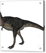 Tarbosaurus Dinosaur Roaring, White Acrylic Print