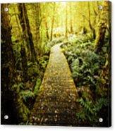 Tarkine Tasmania Trails Acrylic Print