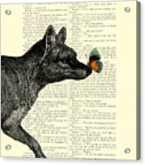 Tasmanian Tiger And Orange Butterfly Antique Illustration On Dictionary Page Acrylic Print