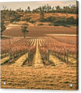 Tasmanian Winery In Winter Acrylic Print
