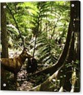 Tasmanian Wolf In Forest Acrylic Print by Christian Darkin
