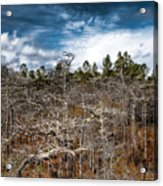 Tate's Hell State Forest Acrylic Print