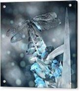 Tattered Wings B2 Acrylic Print