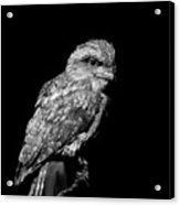Tawny Frogmouth In Black And White Acrylic Print