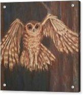 Tawny Owl In Flight Acrylic Print