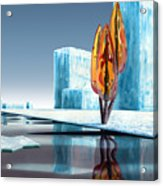 Taxus Glacialis Acrylic Print
