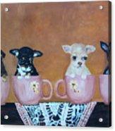 Tea Cup Chihuahuas Acrylic Print