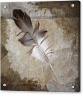 Tea Feather Acrylic Print