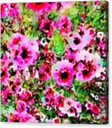 Tea Tree Garden Flowers Acrylic Print