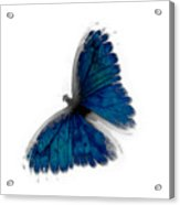 Butterfly Blur In Teal Blues Acrylic Print