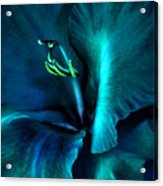 Teal Gladiola Flower Acrylic Print