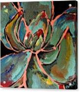 Teal Pink Succulent Acrylic Print