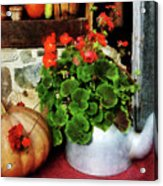 Teapot Filled With Geraniums Acrylic Print
