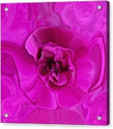 Teapot Rose Acrylic Print