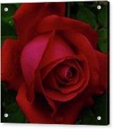 Teardrops Of A Rose Acrylic Print