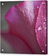 Tears And Petals Acrylic Print