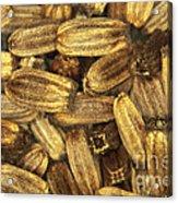 Teasel Seeds Acrylic Print