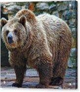 Teddy Bear Alive Acrylic Print
