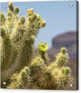 Teddy Bear Cholla Cactus With Flower Acrylic Print