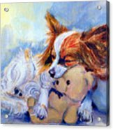 Teddy Hugs - Papillon Dog Acrylic Print