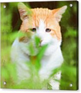 Teddy In The Garden Acrylic Print