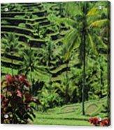 Tegalalang, Bali Acrylic Print