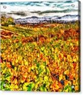 Temecula Vineyard Acrylic Print