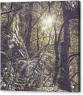 Temperate Rainforest Canopy Acrylic Print