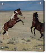 Tempers Flaring Acrylic Print